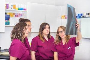 Veterinary team examining x-rays