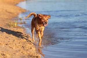 Dog running by the water