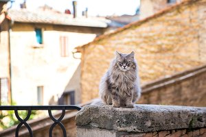 Cat in the bad mood