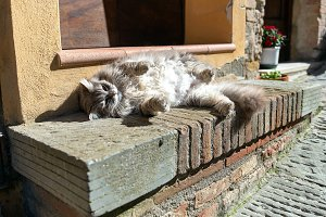 Cat relaxing in the sun