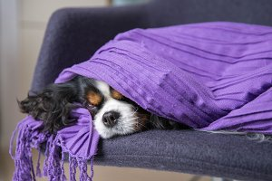 Cute dog under the warm blanket