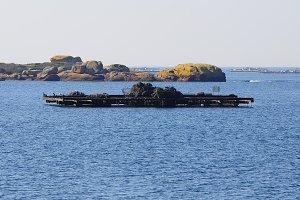 punt for mussel culture