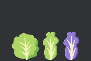 Fresh organic lettuce food vector
