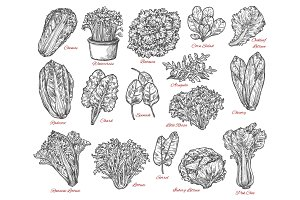 Salad and vegetable sketches