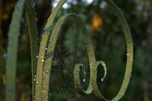 Fresh green curved grass with dew