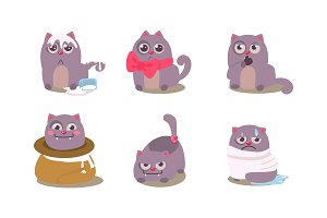 Funny grey cat in different