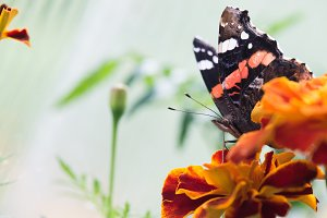 Colorful orange butterfly