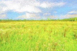 Dutch landscape in summer