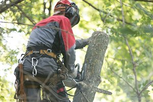 Man sawing a tree using a chainsaw