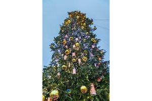 Christmas tree on Sophia Square in