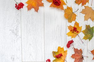 Fallen leaves with design space