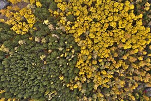 Aerial view of autumn forest in the