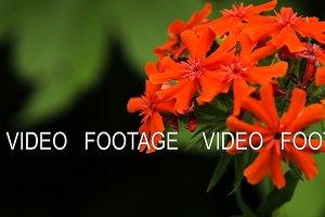Beautiful red wildflower