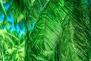 Tropical palm leaves, floral pattern
