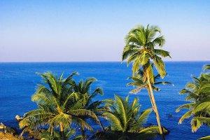 Tropical Paradise view landscape coa