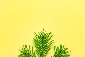 Christmas tree branch yellow