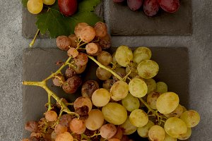 Ripe grapes bunches on slate stone