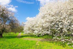 Landscape Spring