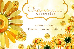 Wildflower yellow chamomile PNG set