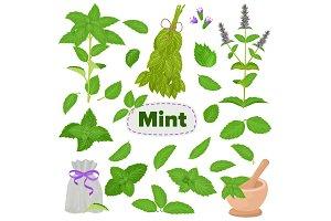 Mint vector spearmint leaves menthol