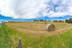 Panorama landscape of farm field