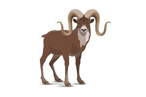 Screw horned markhor goat