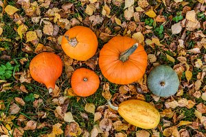 orange pumpkins against the