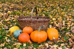 orange pumpkins ad basket against