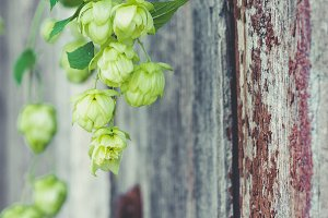 detail of hop cones on a rustik styl