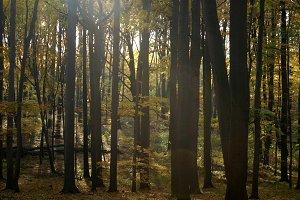 Autumn forest light 04