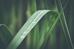 Blade of Grass with waterdrop