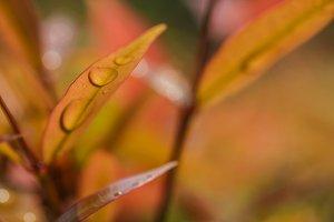 Macro of raindrop on leaves