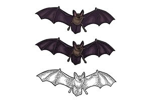Bat flying with scary face. Vector