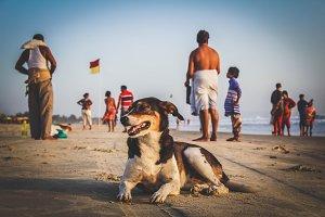 Dog on the beach India, Goa