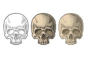Skull human. Black vintage vector