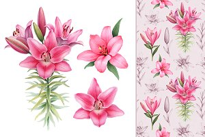 Illustrations of Lilies