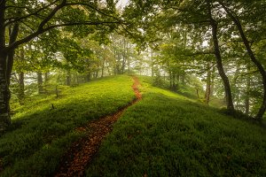 Lush green forest on a foggy day