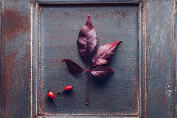 Abstract Stock Photos - Wooden frame with an dried leaf