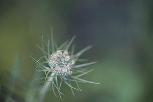 Wild flower soft background