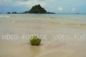Green coconut on the sand beach.