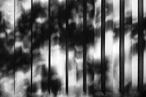 Dramatic shadows of tree leaves on v