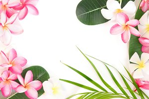 Tropical floral modern border from p