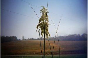 Holga - Plant