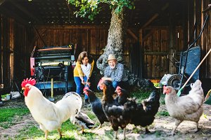 A senior couple with hens on a farm.