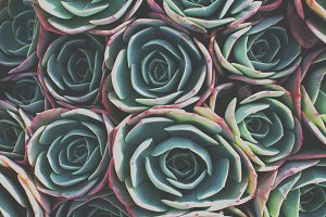 Green Succulent Plant Close Up Photo