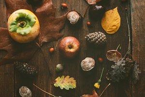 autumn findings