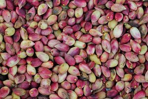 Fresh Raw Pistachio Nuts
