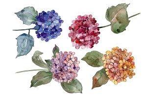 Big colorful gortenzia flowers PNG