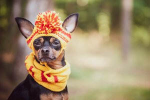 Dog in a scarf and hat in an autumn
