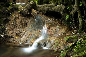 Small cascade flowing under tree tru